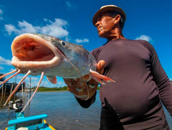 Exportação de Pescados no Ceará salta 66,7% em um ano, segundo Sedet